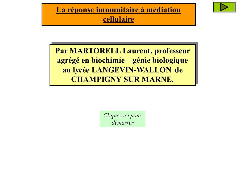 La RIMC est essentielle dans lélimination : La RIMC est essentielle dans lélimination : La réponse immunitaire à médiation cellulaire (R.I.M.C) des cellules infectées par des PARASITES INTRACELLULAIRES comme certaines bactéries (agent de la tuberculose…) et les virus (VIH, VHB, virus de la grippe…) ; des cellules infectées par des PARASITES INTRACELLULAIRES comme certaines bactéries (agent de la tuberculose…) et les virus (VIH, VHB, virus de la grippe…) ; des CELLULES CANCEREUSES ; des CELLULES CANCEREUSES ; des CELLULES DUNE GREFFE ALLOGENIQUE.
