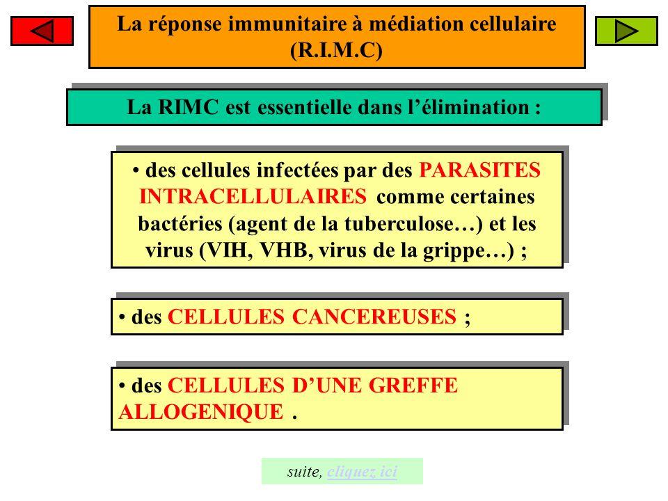 La réponse immunitaire à médiation cellulaire (RIMC) La RIMC fait intervenir les cellules immunitaires suivantes : La RIMC fait intervenir les cellules immunitaires suivantes : les macrophages ; les macrophages ; les lymphocytes T dont les LT 4 et LT 8.