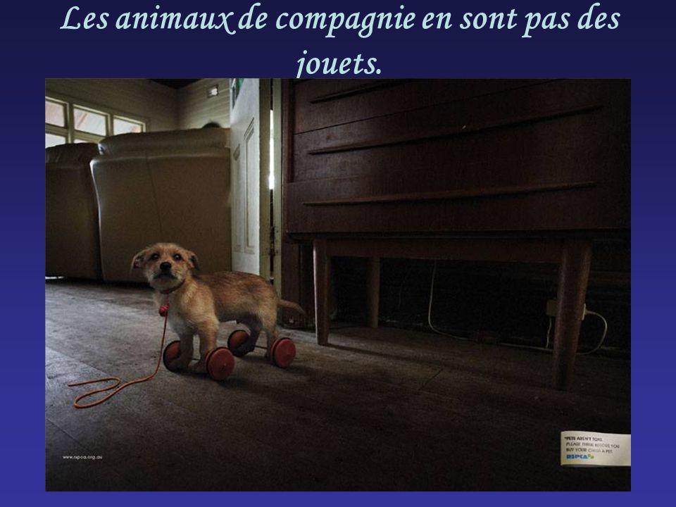 Les animaux de compagnie en sont pas des jouets.