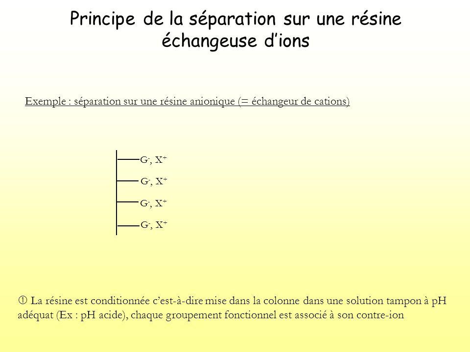 Principe de la séparation sur une résine échangeuse dions Exemple : séparation sur une résine anionique (= échangeur de cations) G -, X + La résine est conditionnée cest-à-dire mise dans la colonne dans une solution tampon à pH adéquat (Ex : pH acide), chaque groupement fonctionnel est associé à son contre-ion