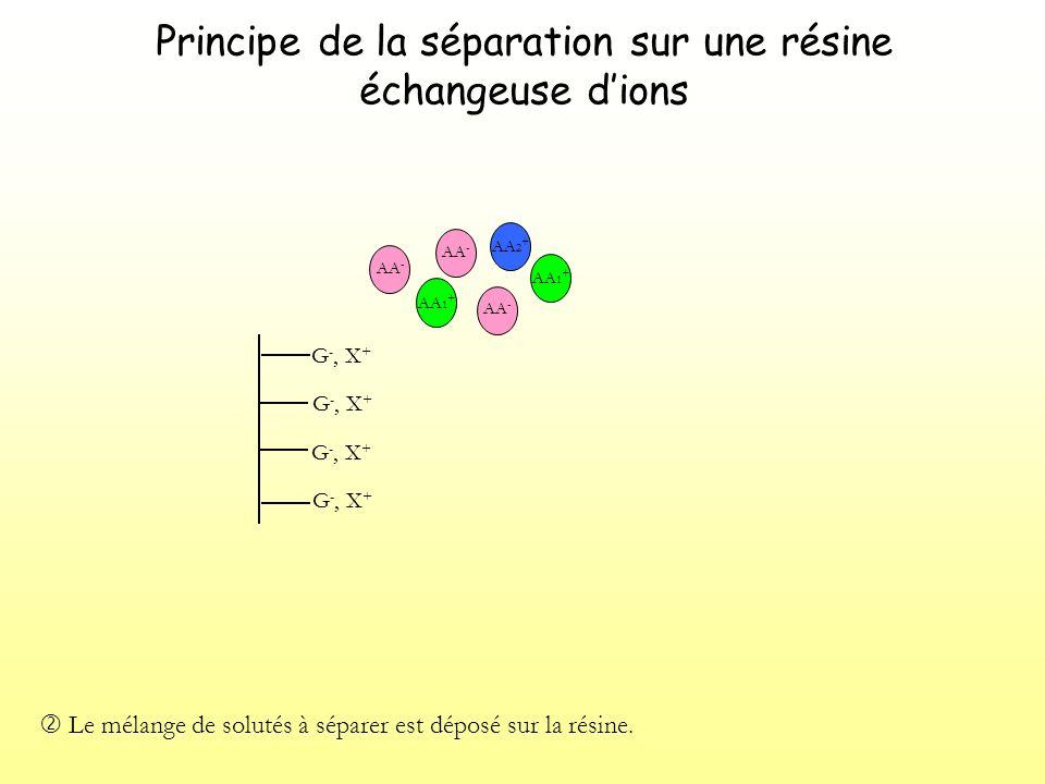 Principe de la séparation sur une résine échangeuse dions G -, X + Les solutés migrent dans la résine poreuse.
