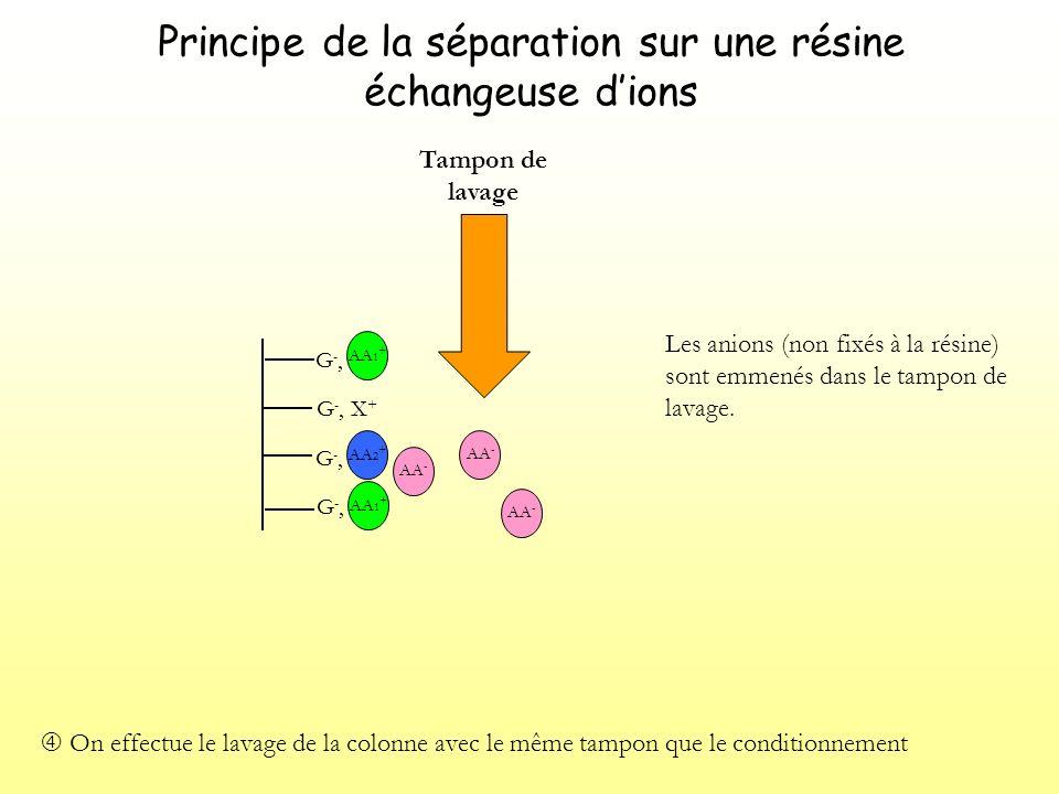 Principe de la séparation sur une résine échangeuse dions G-,G-, G -, X + G-,G-, G-,G-, Elution : on applique un tampon délution qui modifient les conditions de fixation.