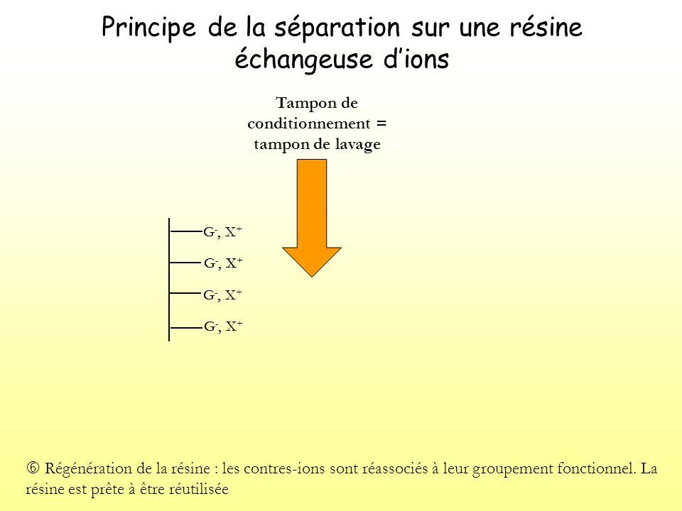 Principe de la séparation sur une résine échangeuse dions G -, X + Régénération de la résine : les contres-ions sont réassociés à leur groupement fonctionnel.
