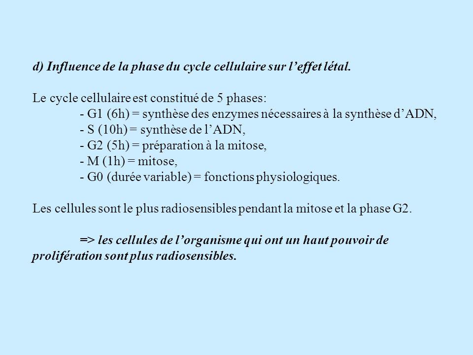 d) Influence de la phase du cycle cellulaire sur leffet létal. Le cycle cellulaire est constitué de 5 phases: - G1 (6h) = synthèse des enzymes nécessa