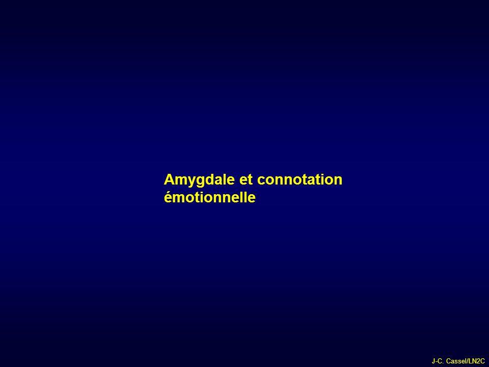 J-C. Cassel/LN2C Amygdale et connotation émotionnelle