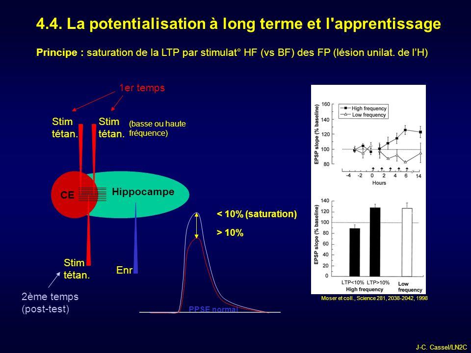 J-C.Cassel/LN2C 4.4. La potentialisation à long terme et l apprentissage Hippocampe CE Stim tétan.