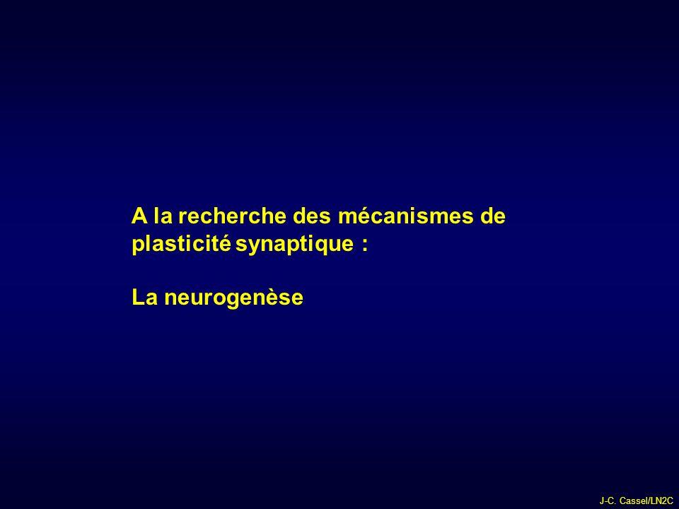 J-C. Cassel/LN2C A la recherche des mécanismes de plasticité synaptique : La neurogenèse