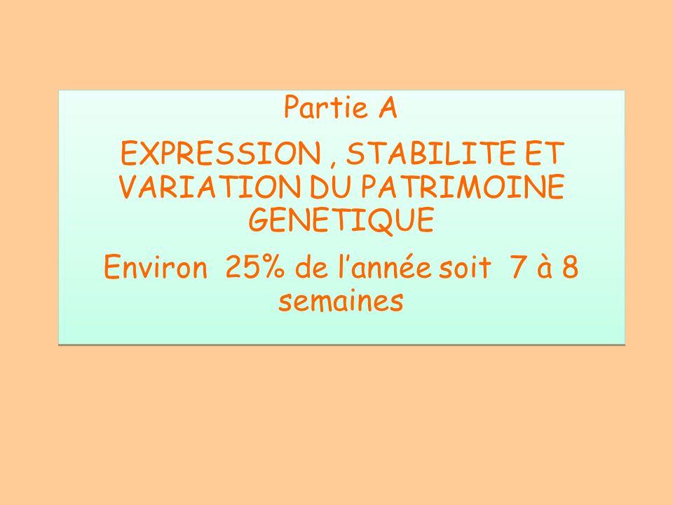 Partie A EXPRESSION, STABILITE ET VARIATION DU PATRIMOINE GENETIQUE Environ 25% de lannée soit 7 à 8 semaines Partie A EXPRESSION, STABILITE ET VARIAT