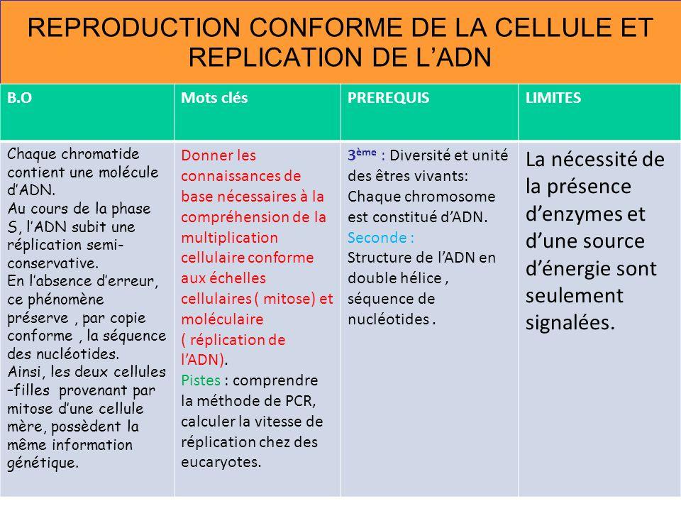 REPRODUCTION CONFORME DE LA CELLULE ET REPLICATION DE LADN B.OMots clésPREREQUISLIMITES Chaque chromatide contient une molécule dADN. Au cours de la p