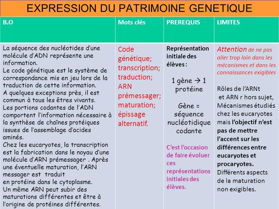 EXPRESSION DU PATRIMOINE GENETIQUE B.OMots clésPREREQUISLIMITES La séquence des nucléotides dune molécule dADN représente une information. Le code gén