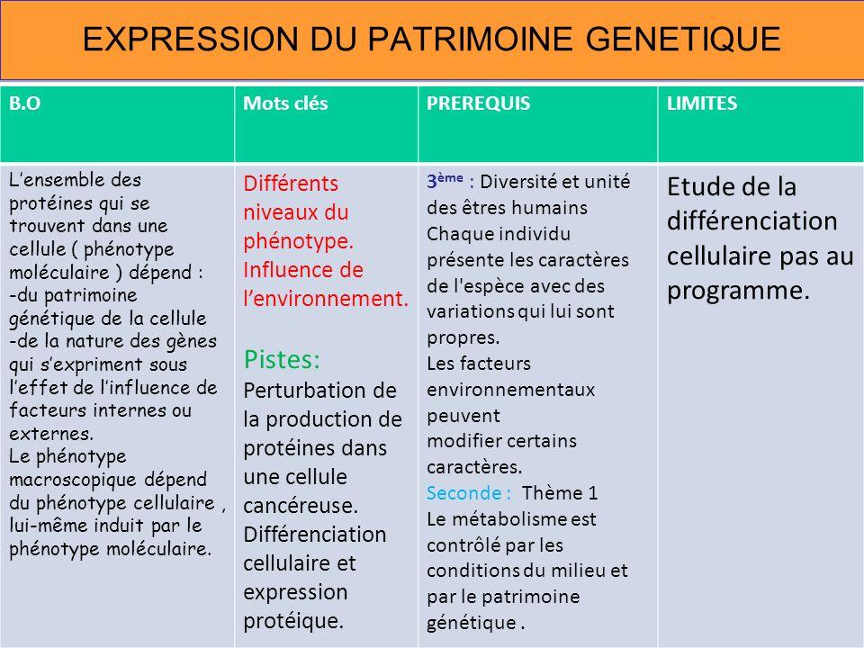 EXPRESSION DU PATRIMOINE GENETIQUE B.OMots clésPREREQUISLIMITES Lensemble des protéines qui se trouvent dans une cellule ( phénotype moléculaire ) dép