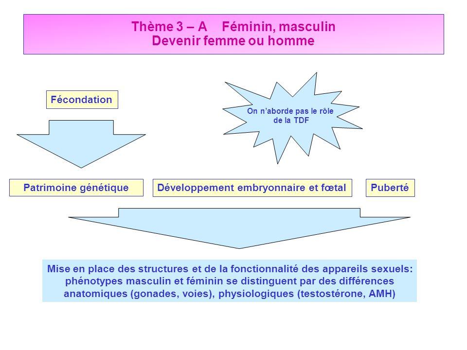 Thème 3 – A Féminin, masculin Devenir femme ou homme Fécondation PubertéDéveloppement embryonnaire et fœtalPatrimoine génétique Mise en place des stru