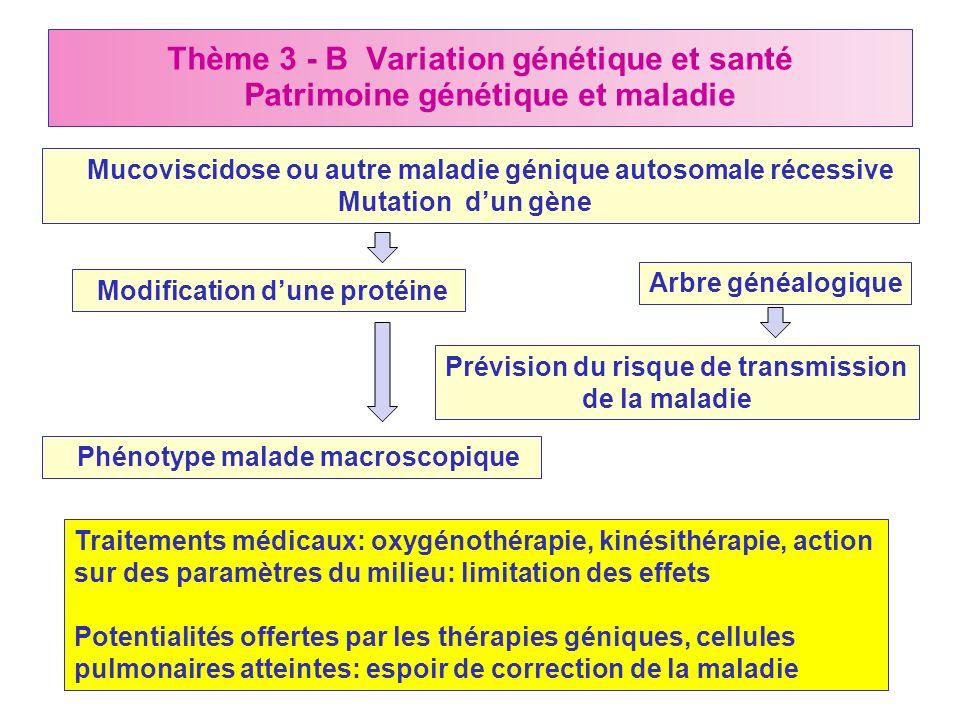 Thème 3 - B Variation génétique et santé Patrimoine génétique et maladie Mucoviscidose ou autre maladie génique autosomale récessive Mutation dun gène