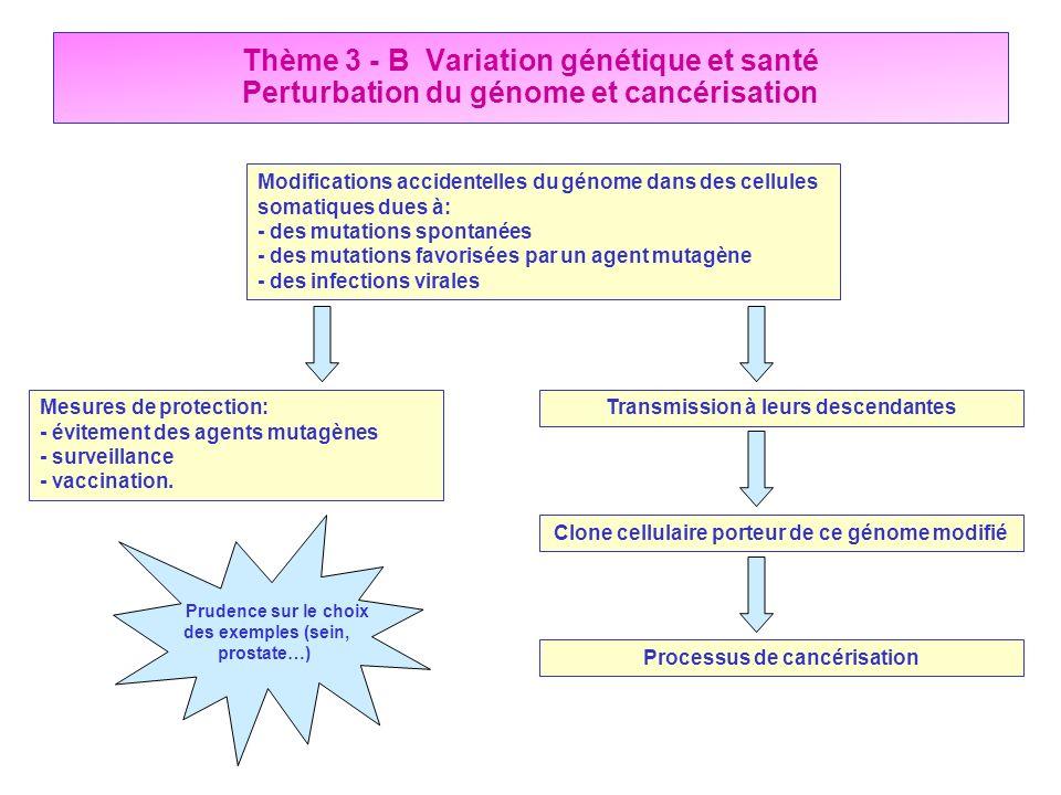 Thème 3 - B Variation génétique et santé Perturbation du génome et cancérisation Modifications accidentelles du génome dans des cellules somatiques du