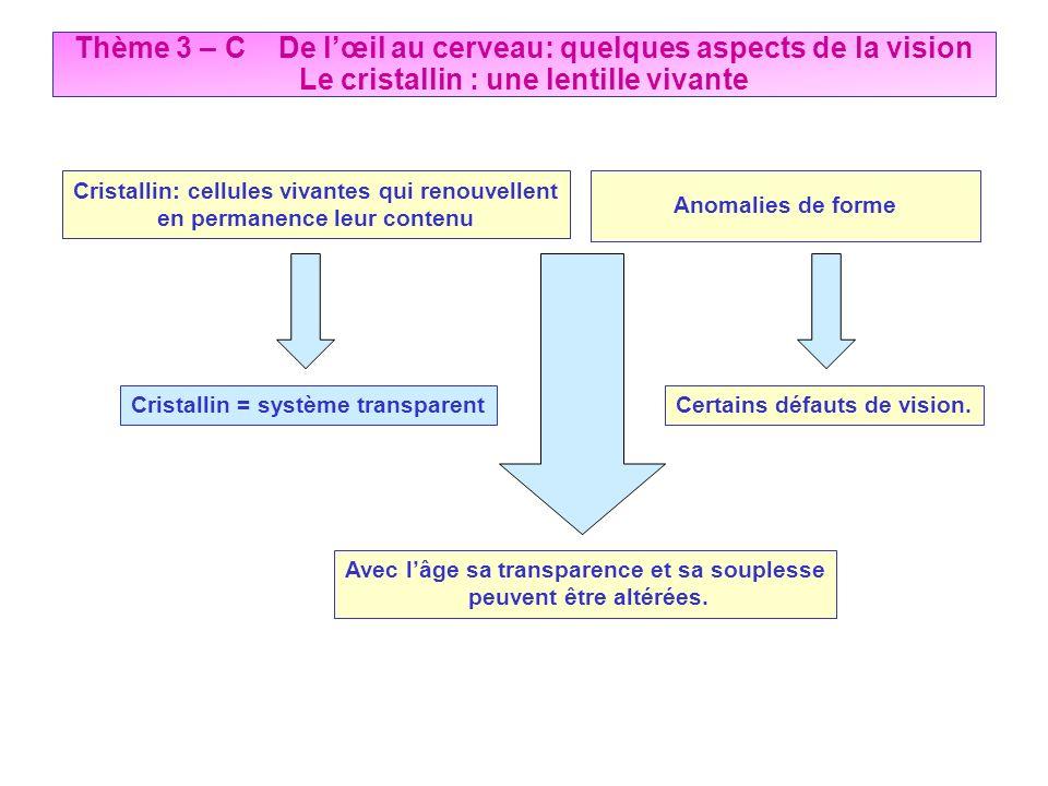 Thème 3 – C De lœil au cerveau: quelques aspects de la vision Le cristallin : une lentille vivante Cristallin = système transparent Cristallin: cellul