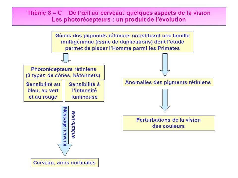 Thème 3 – C De lœil au cerveau: quelques aspects de la vision Les photorécepteurs : un produit de lévolution Gènes des pigments rétiniens constituant