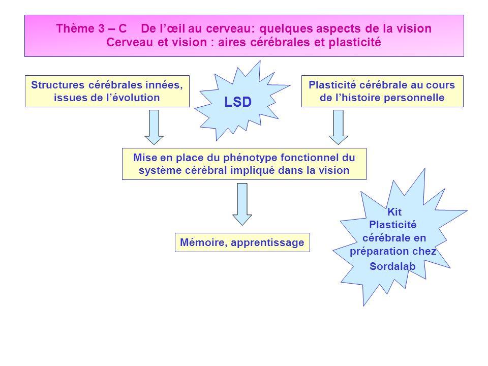Thème 3 – C De lœil au cerveau: quelques aspects de la vision Cerveau et vision : aires cérébrales et plasticité Structures cérébrales innées, issues