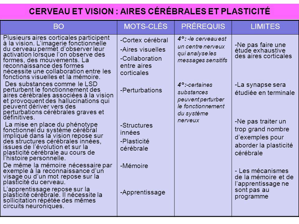 CERVEAU ET VISION : AIRES CÉRÉBRALES ET PLASTICITÉ BOMOTS-CLÉSPRÉREQUISLIMITES Plusieurs aires corticales participent à la vision. Limagerie fonctionn