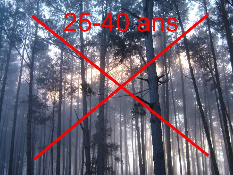 Programme de Préservation et de Valorisation de la Biodiversité PVB Inventaire forestier en zone marron Résultats Carte des types de forêt de pin et d