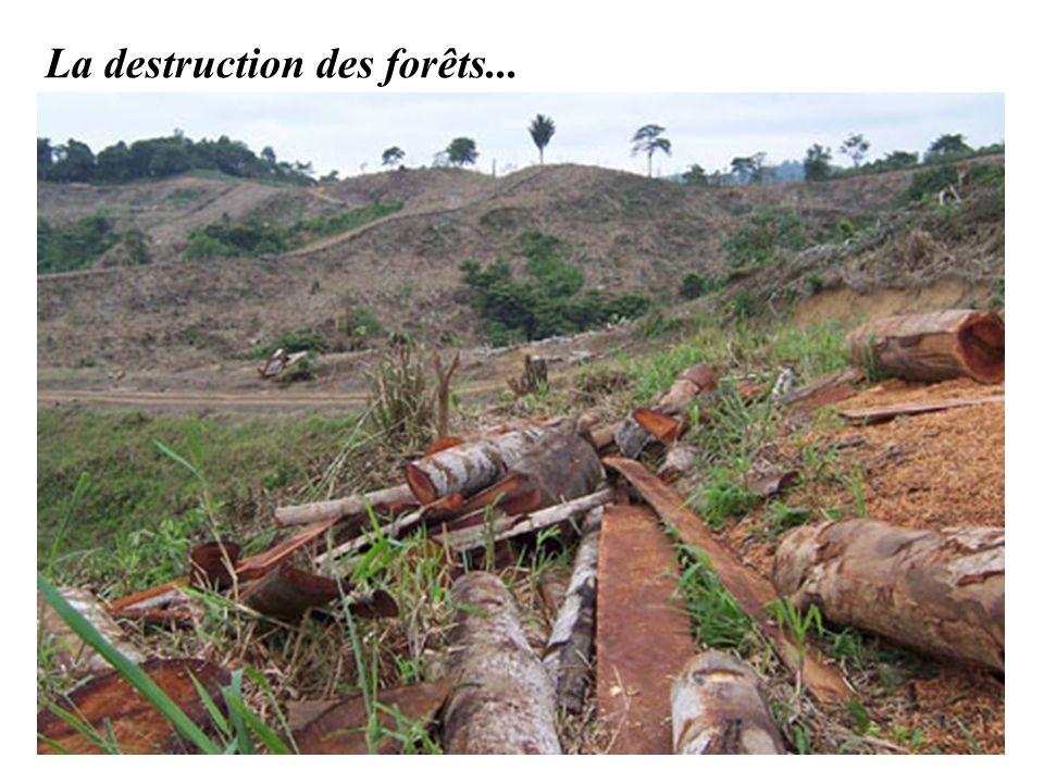 La destruction des forêts...
