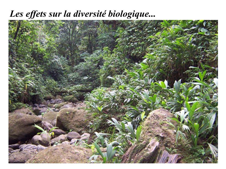 Les effets sur la diversité biologique...