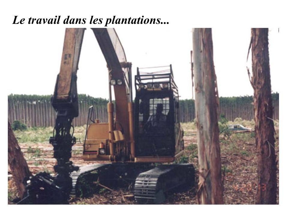 Le travail dans les plantations...