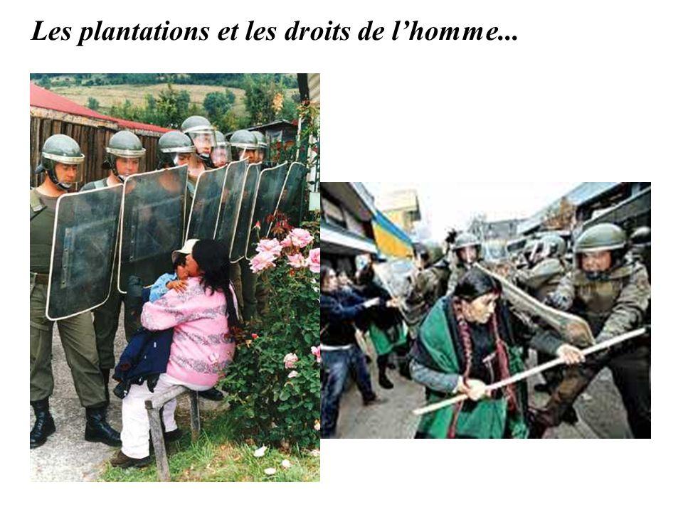 Les plantations et les droits de lhomme...