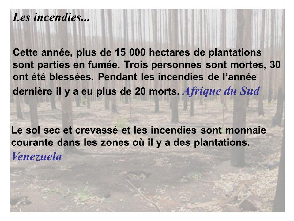 Cette année, plus de 15 000 hectares de plantations sont parties en fumée.