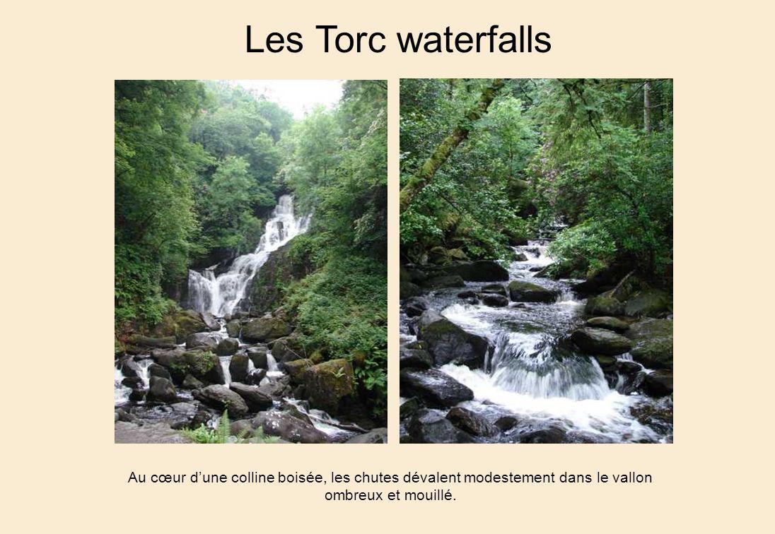 Les Torc waterfalls Au cœur dune colline boisée, les chutes dévalent modestement dans le vallon ombreux et mouillé.