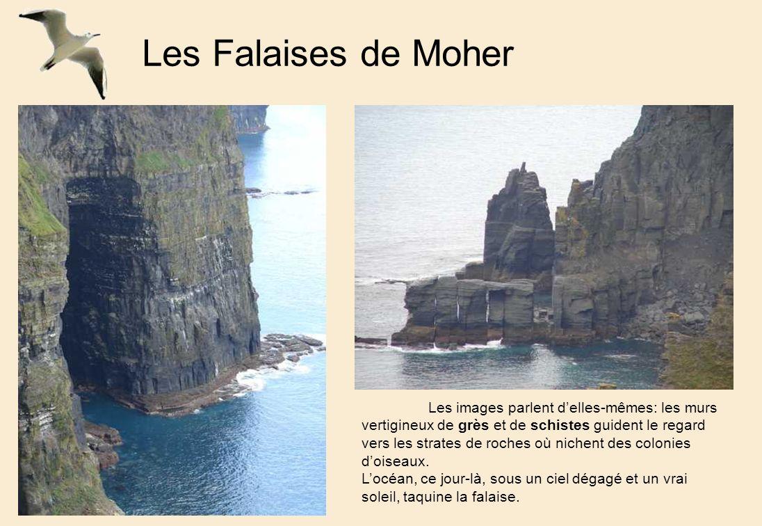 Les Falaises de Moher Les images parlent delles-mêmes: les murs vertigineux de grès et de schistes guident le regard vers les strates de roches où nichent des colonies doiseaux.