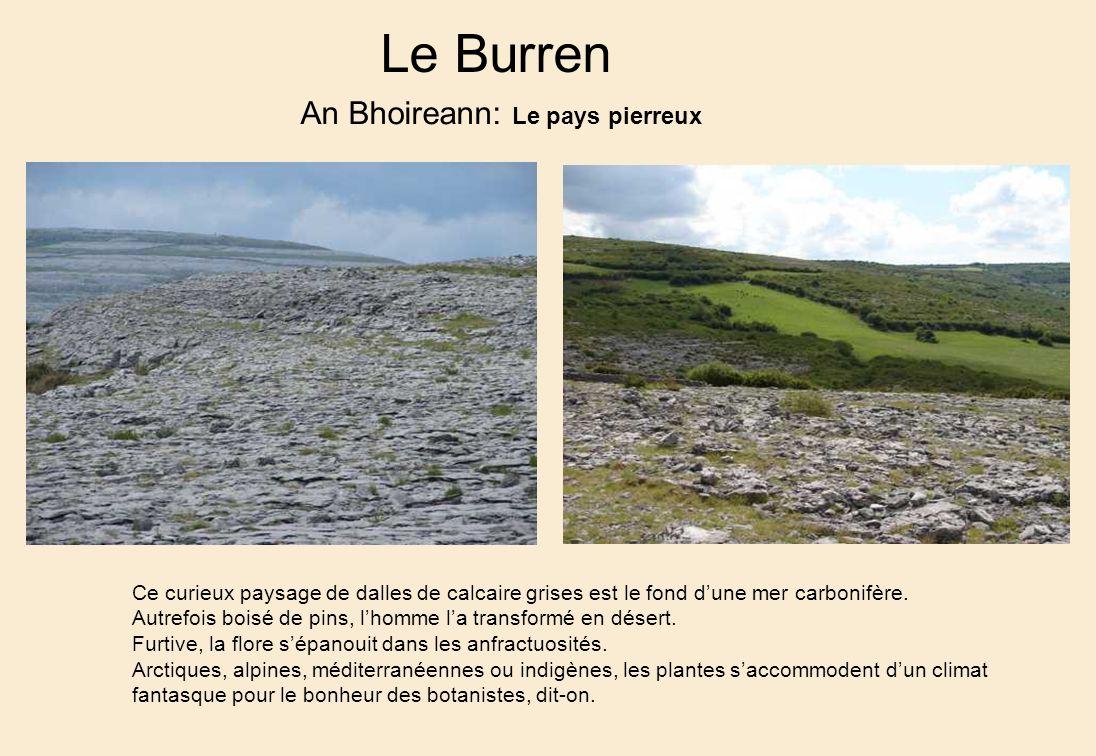 Le Burren An Bhoireann: Le pays pierreux Ce curieux paysage de dalles de calcaire grises est le fond dune mer carbonifère.