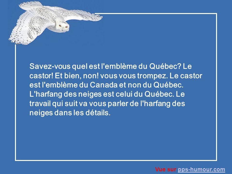 Lharfang des neiges Vue sur pps-humour.compps-humour.com