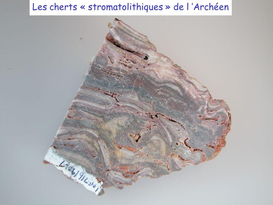 Les cherts « stromatolithiques » de l Archéen