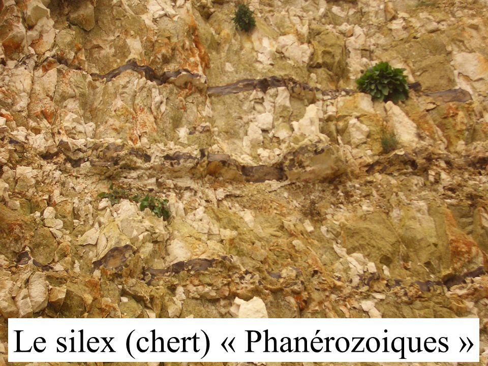 Le silex (chert) « Phanérozoiques »