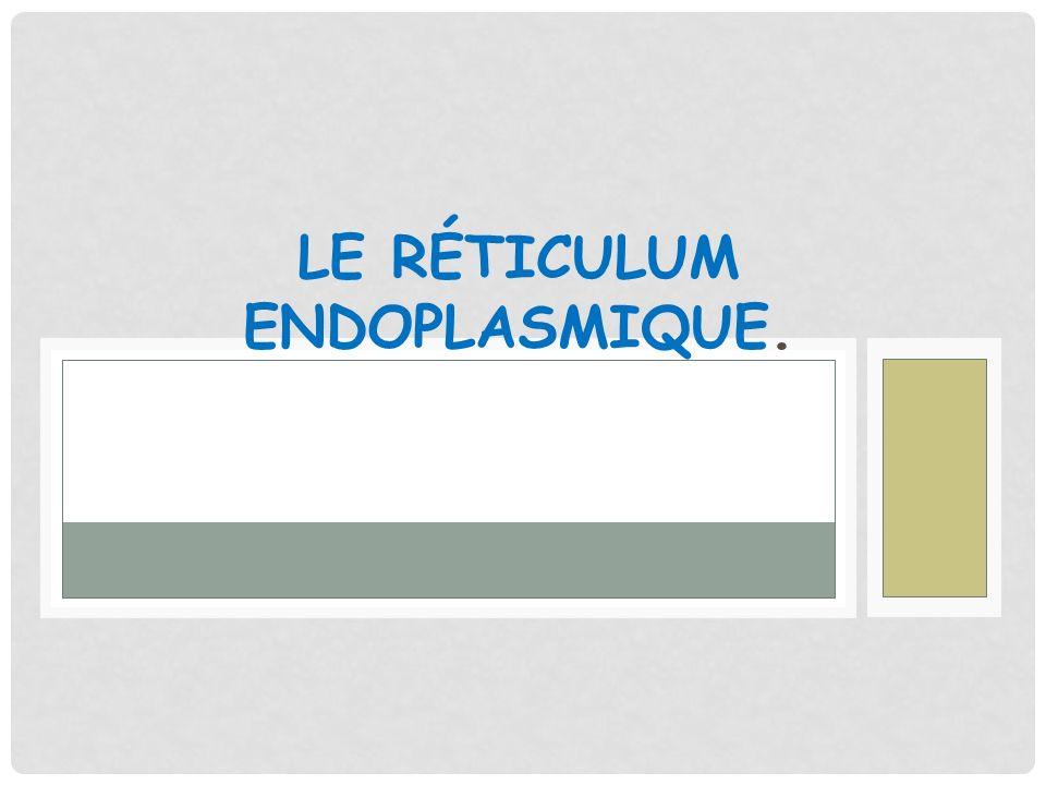 LE RÉTICULUM ENDOPLASMIQUE.