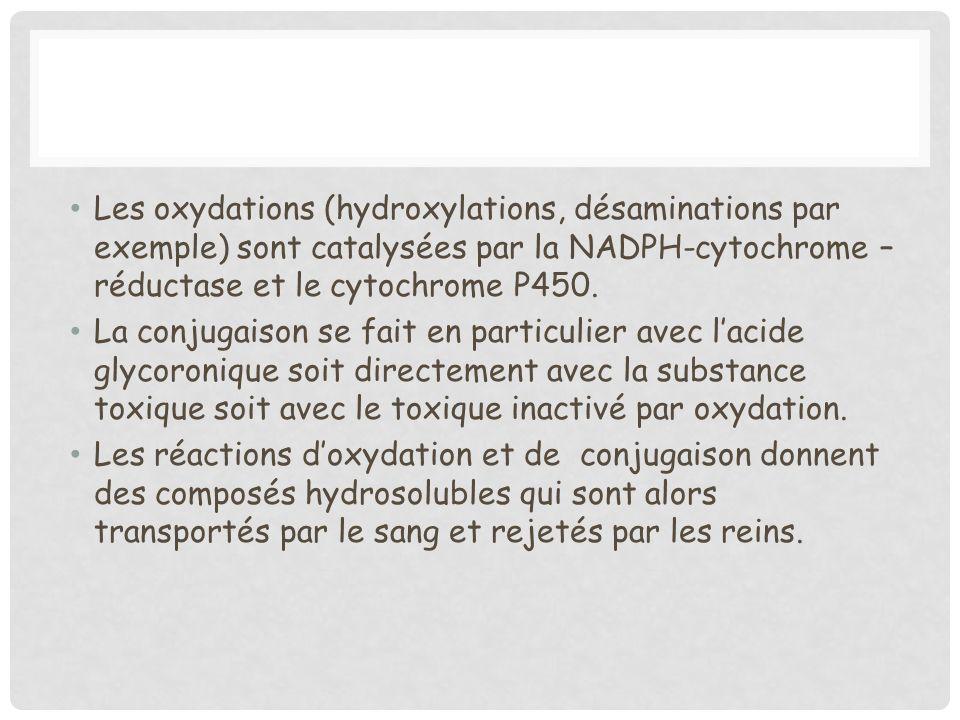 Les oxydations (hydroxylations, désaminations par exemple) sont catalysées par la NADPH-cytochrome – réductase et le cytochrome P450. La conjugaison s