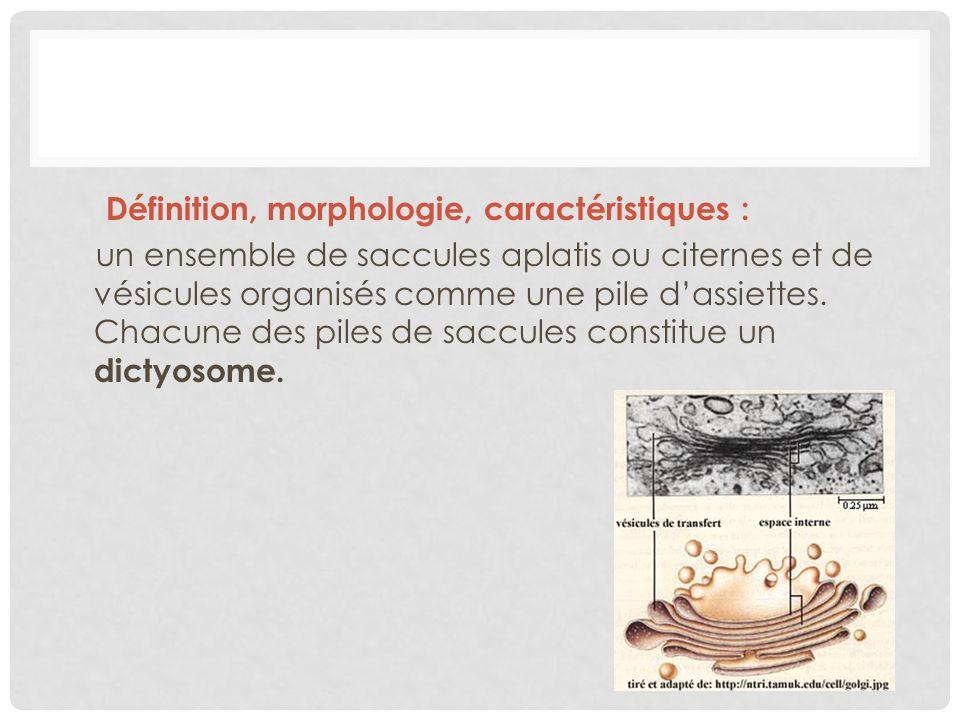 Définition, morphologie, caractéristiques : un ensemble de saccules aplatis ou citernes et de vésicules organisés comme une pile dassiettes. Chacune d