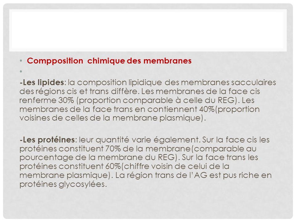 Compposition chimique des membranes -Les lipides : la composition lipidique des membranes sacculaires des régions cis et trans diffère. Les membranes