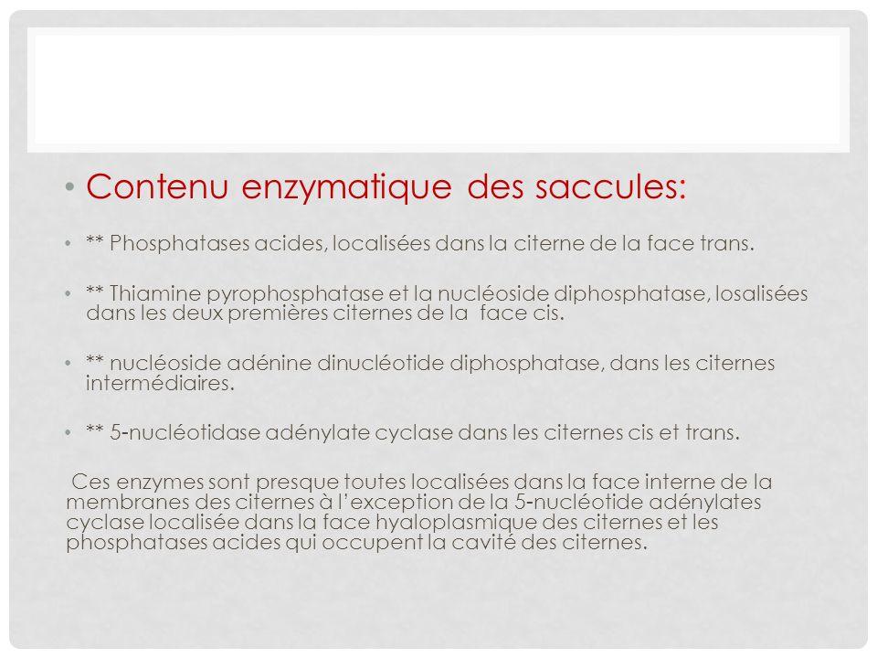 Contenu enzymatique des saccules: ** Phosphatases acides, localisées dans la citerne de la face trans. ** Thiamine pyrophosphatase et la nucléoside di