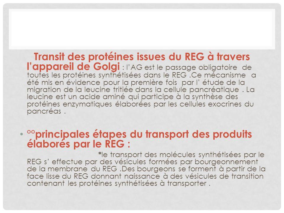 Transit des protéines issues du REG à travers lappareil de Golgi : lAG est le passage obligatoire de toutes les protéines synthétisées dans le REG.Ce