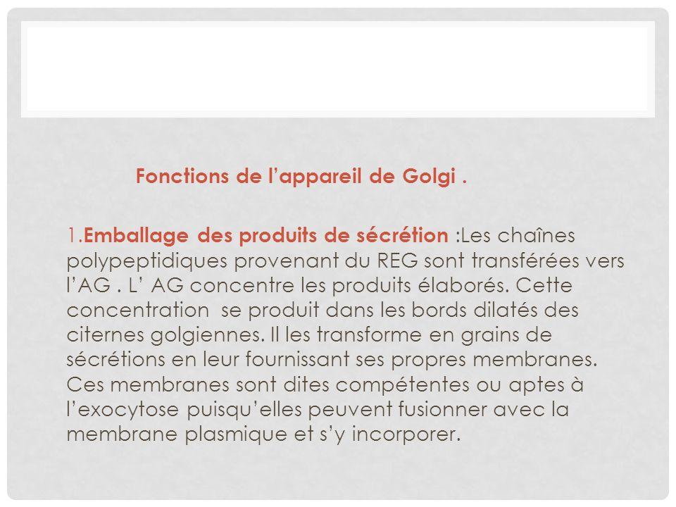 Fonctions de lappareil de Golgi. 1. Emballage des produits de sécrétion :Les chaînes polypeptidiques provenant du REG sont transférées vers lAG. L AG