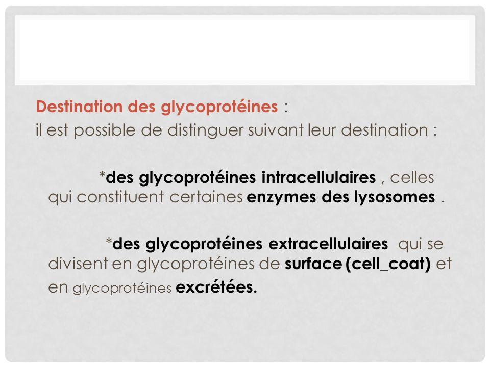 Destination des glycoprotéines : il est possible de distinguer suivant leur destination : * des glycoprotéines intracellulaires, celles qui constituen