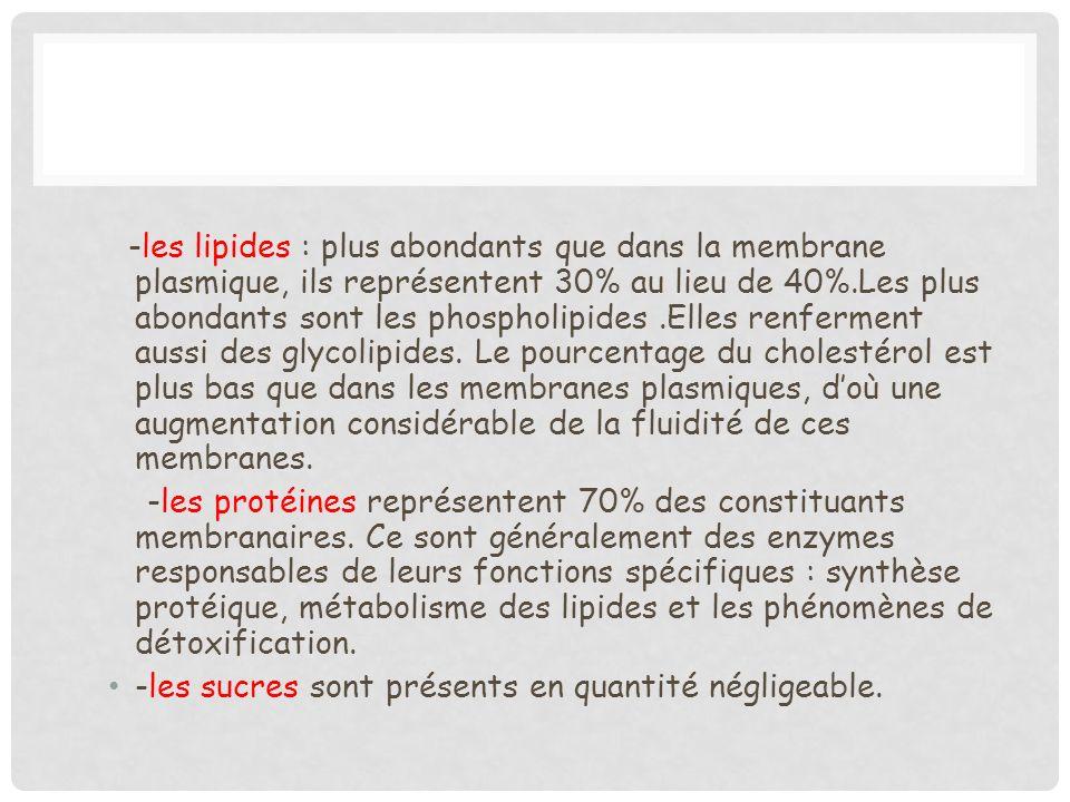 -les lipides : plus abondants que dans la membrane plasmique, ils représentent 30% au lieu de 40%.Les plus abondants sont les phospholipides.Elles ren