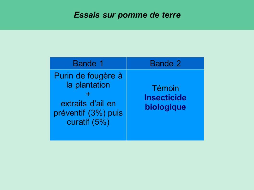 Essais sur pomme de terre Bande 1Bande 2 Purin de fougère à la plantation + extraits d ail en préventif (3%) puis curatif (5%) Témoin Insecticide biologique