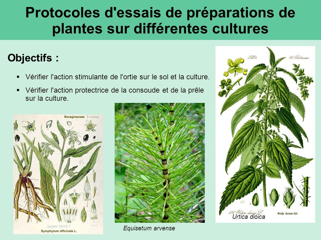 Protocoles d essais de préparations de plantes sur différentes cultures Objectifs : Vérifier l action stimulante de l ortie sur le sol et la culture.