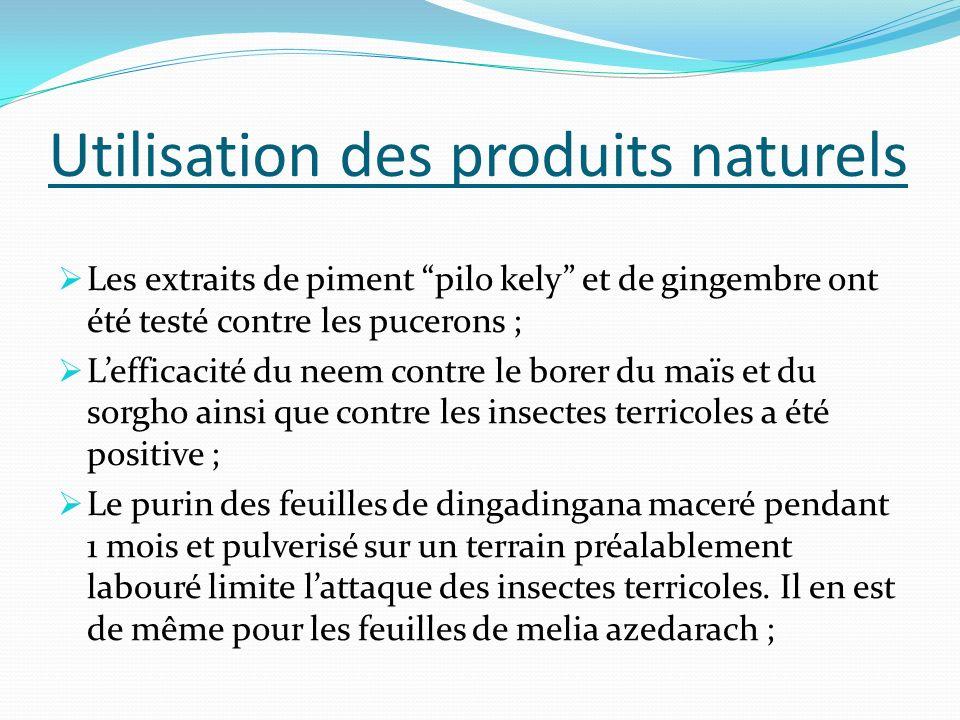 Utilisation des produits naturels Les extraits de piment pilo kely et de gingembre ont été testé contre les pucerons ; Lefficacité du neem contre le b
