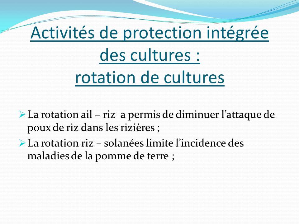 Activités de protection intégrée des cultures : rotation de cultures La rotation ail – riz a permis de diminuer lattaque de poux de riz dans les riziè