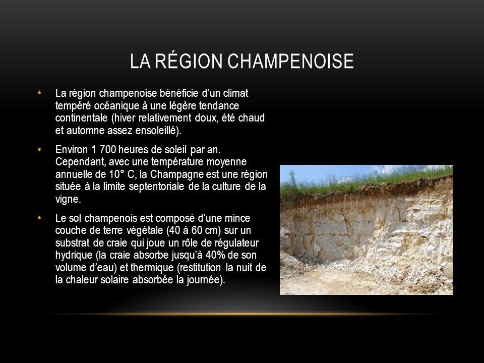 CETTE MINÉRALOGIE CONVIENT PARTICULIÈREMENT AUX 3 CÉPAGES CHAMPENOIS.