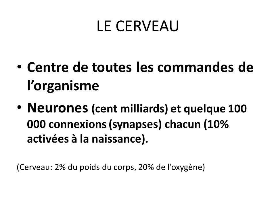 LE CERVEAU Centre de toutes les commandes de lorganisme Neurones (cent milliards) et quelque 100 000 connexions (synapses) chacun (10% activées à la naissance).