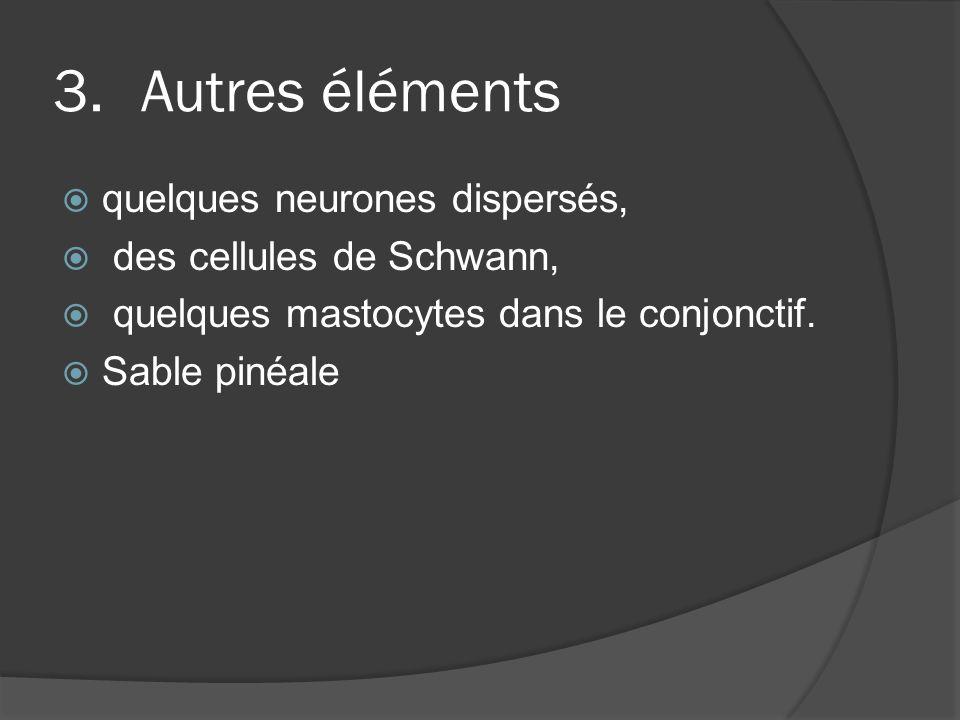 3.Autres éléments quelques neurones dispersés, des cellules de Schwann, quelques mastocytes dans le conjonctif. Sable pinéale